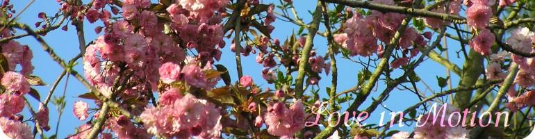 cropped-aprillimbanner1.jpg