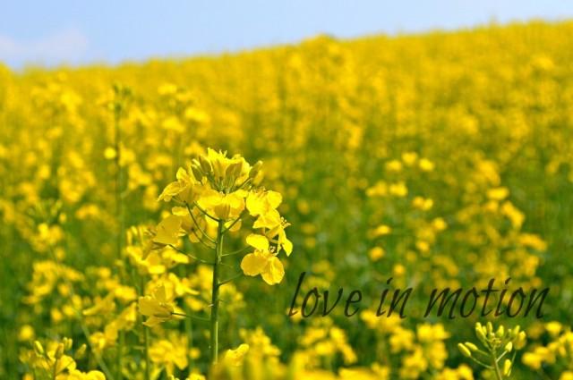 cropped-rapeseedblogheader1.jpg