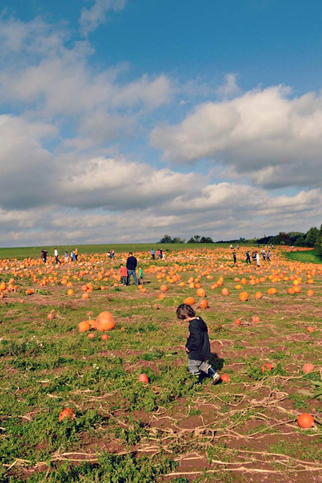 PumpkinPatch2014