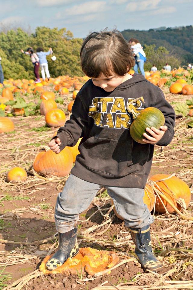 PumpkinSquash