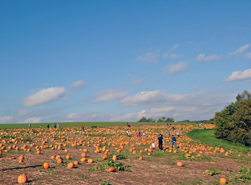 SunshinePumpkinPatch